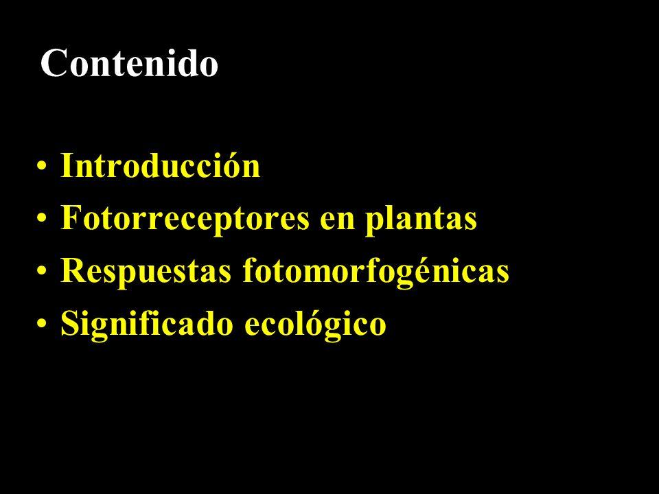 Contenido Introducción Fotorreceptores en plantas