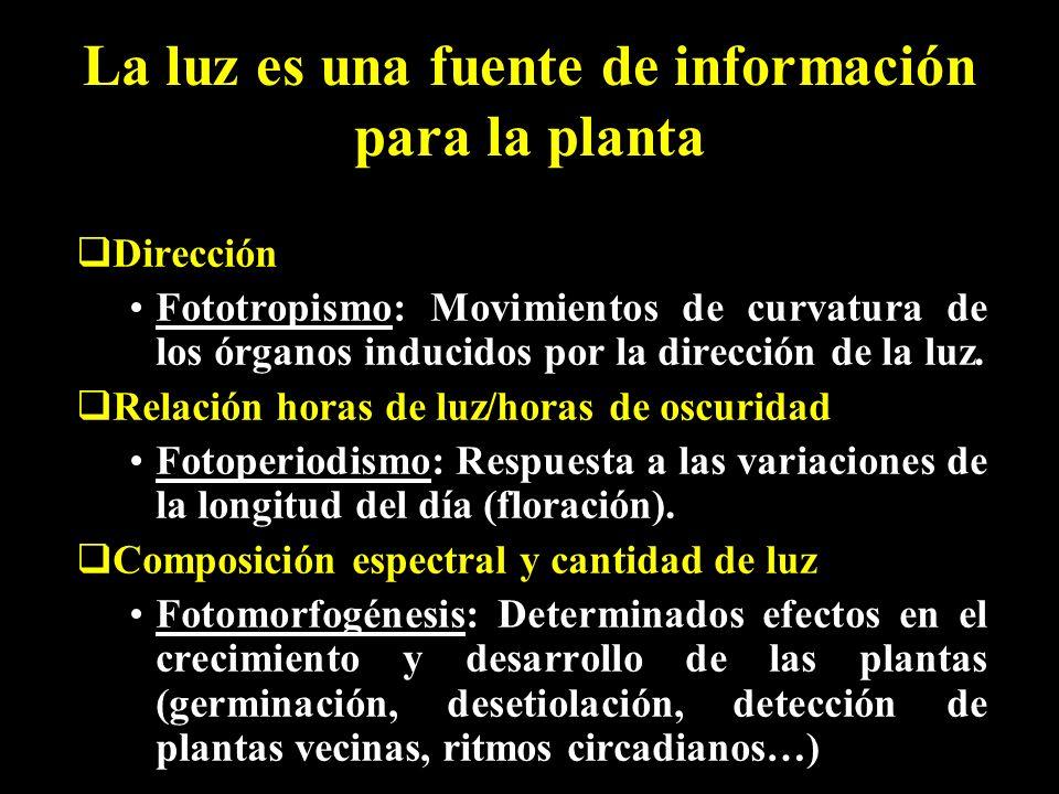 La luz es una fuente de información para la planta