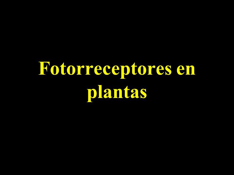 Fotorreceptores en plantas