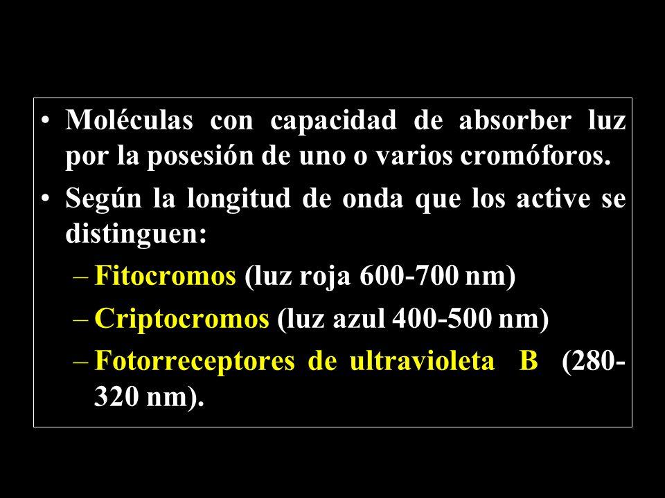 Moléculas con capacidad de absorber luz por la posesión de uno o varios cromóforos.