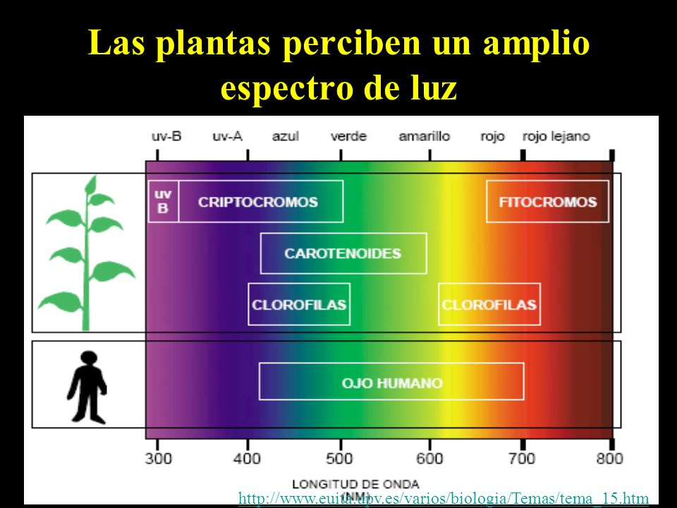 Las plantas perciben un amplio espectro de luz
