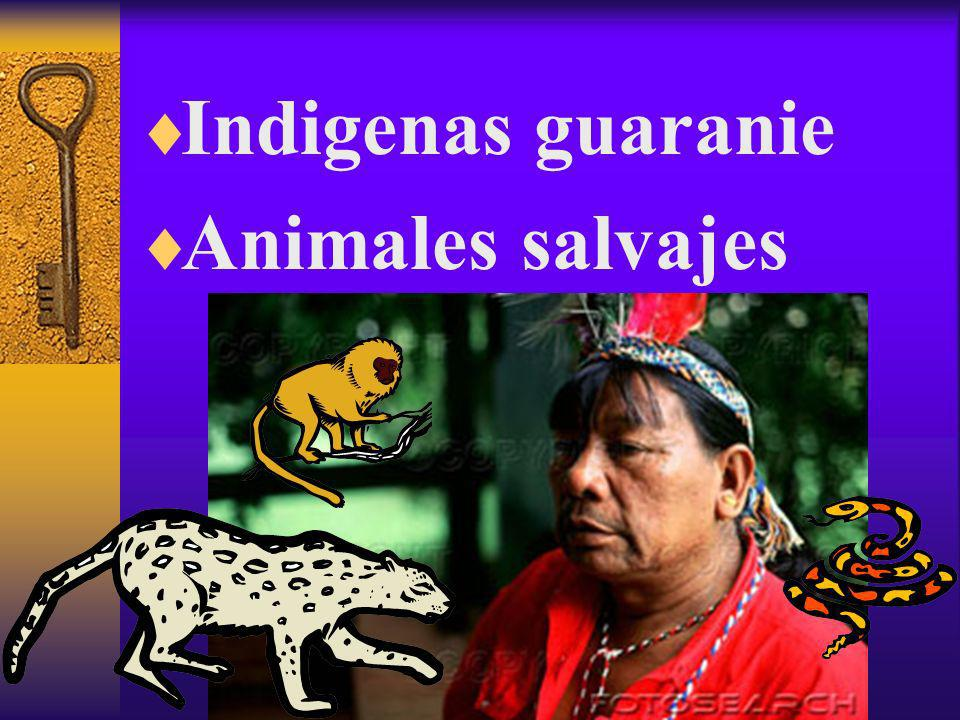 Indigenas guaranie Animales salvajes