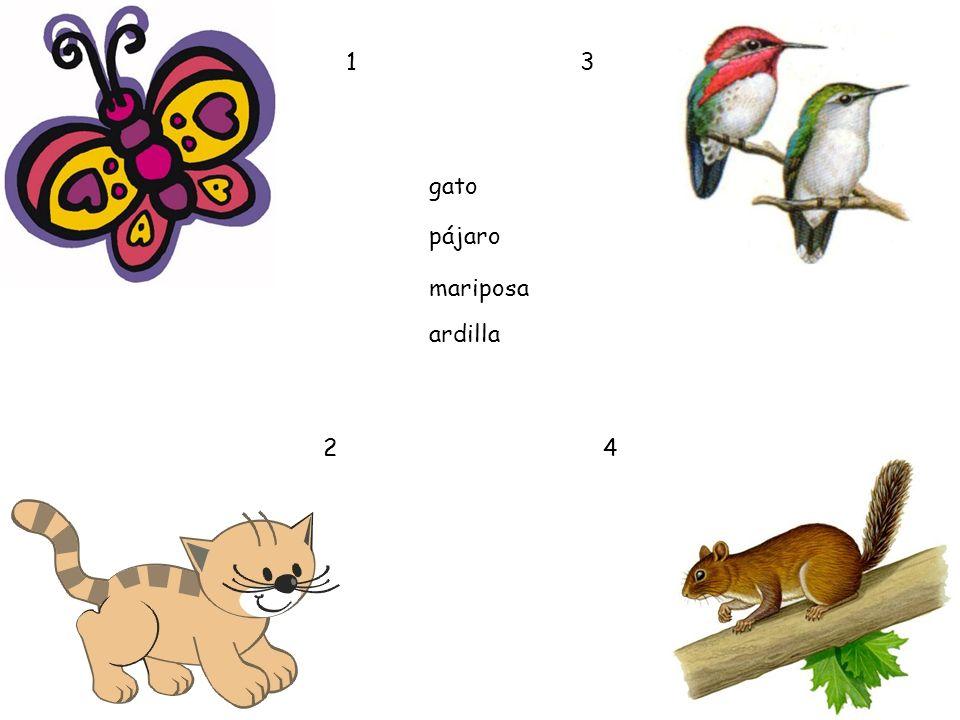 1 3 gato pájaro mariposa ardilla 2 4