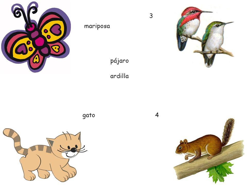3 mariposa pájaro ardilla gato 4