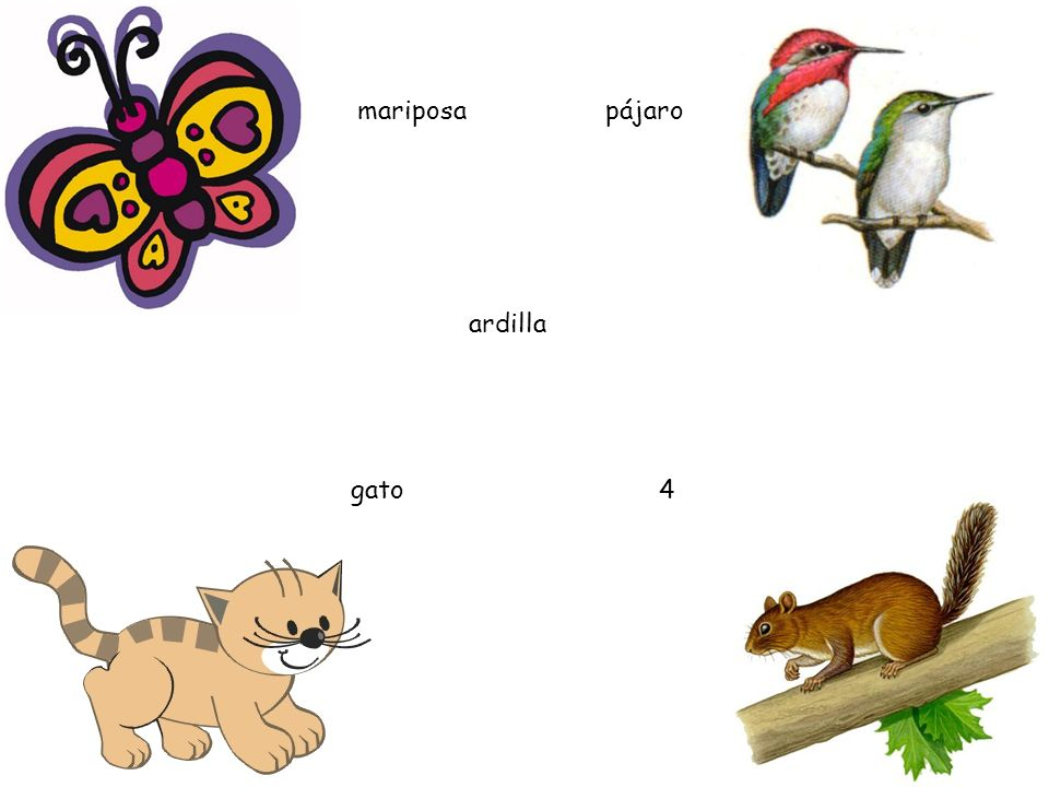 mariposa pájaro ardilla gato 4
