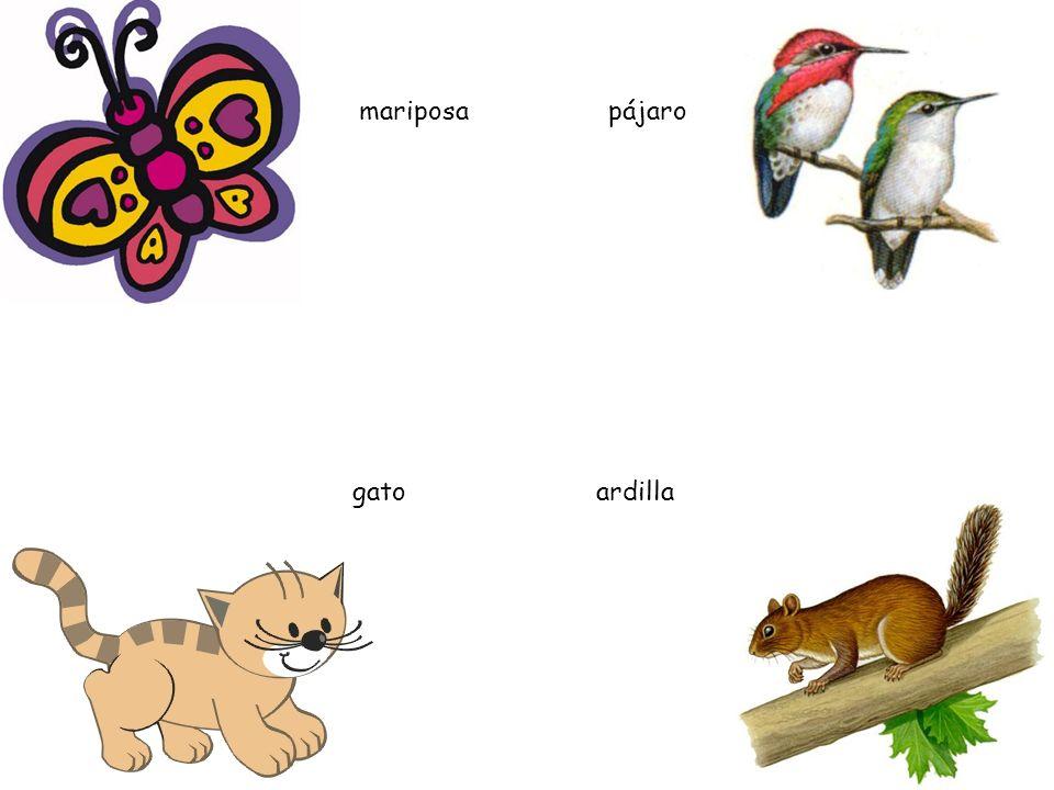 mariposa pájaro gato ardilla