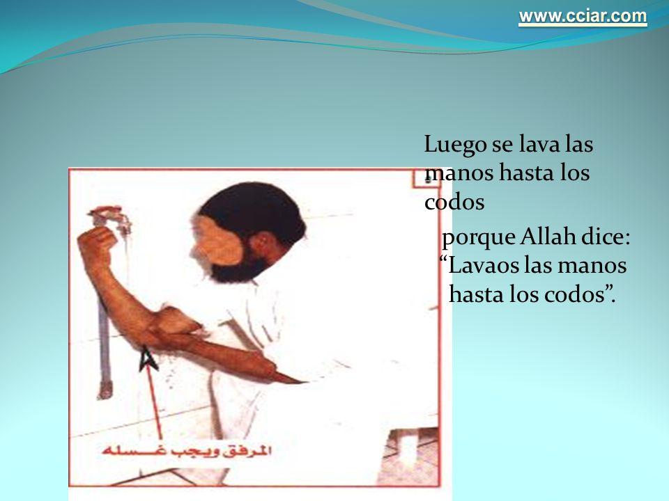 www.cciar.com Luego se lava las manos hasta los codos porque Allah dice: Lavaos las manos hasta los codos .