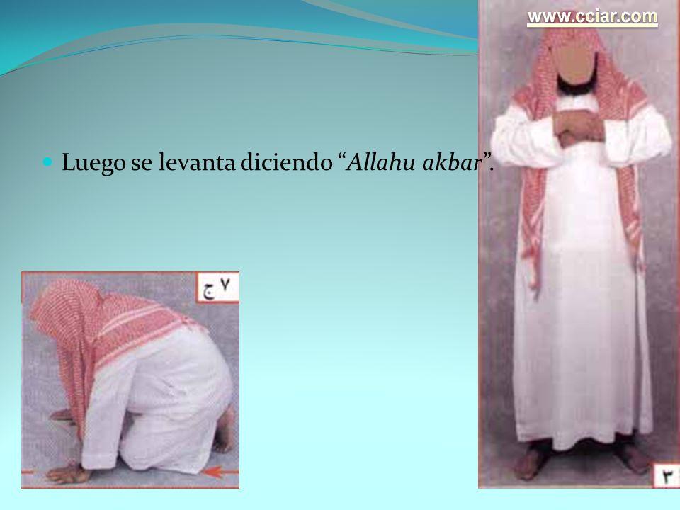 Luego se levanta diciendo Allahu akbar .