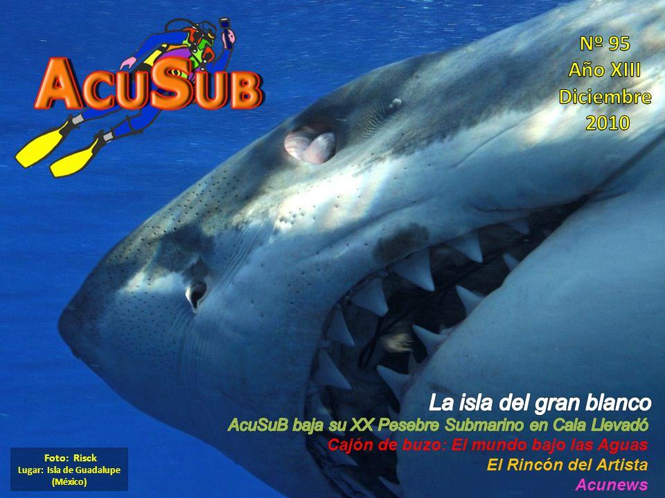 Lugar: Isla de Guadalupe (México)