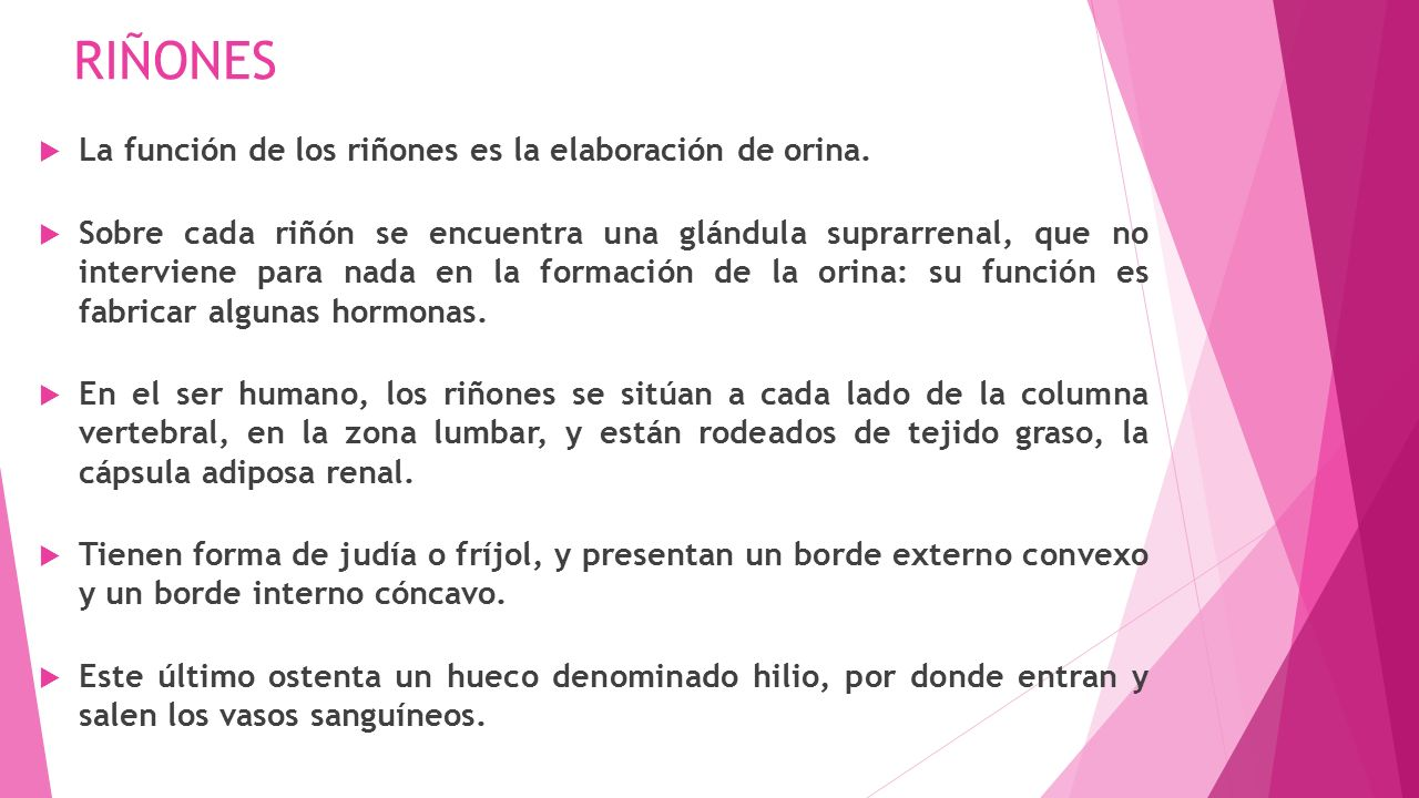Multiversidad latinoamericana saber declarativo sistema for En k parte del cuerpo estan los rinones