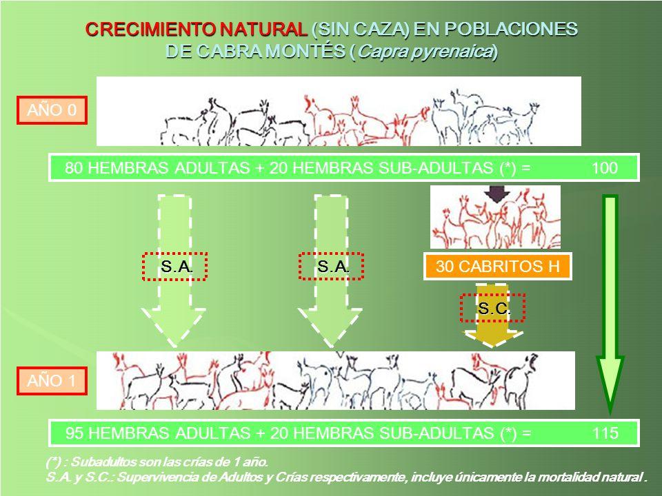 CRECIMIENTO NATURAL (SIN CAZA) EN POBLACIONES DE CABRA MONTÉS (Capra pyrenaica)