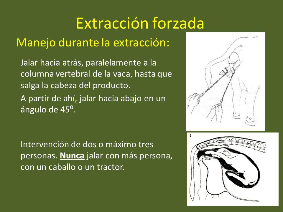 Extracción forzada Manejo durante la extracción: