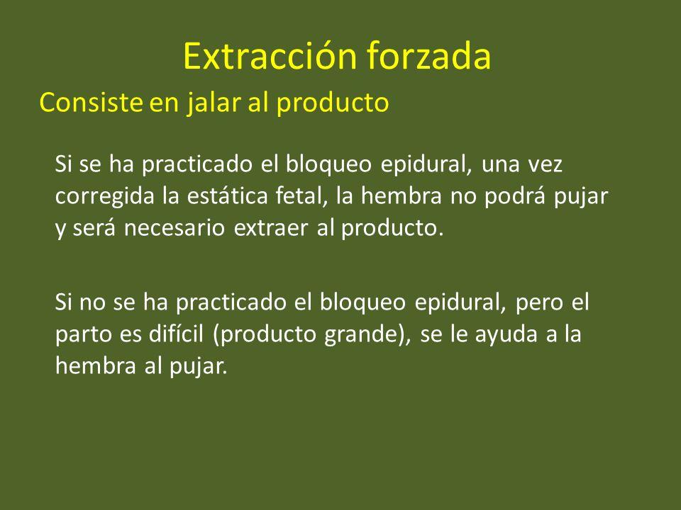 Extracción forzada Consiste en jalar al producto