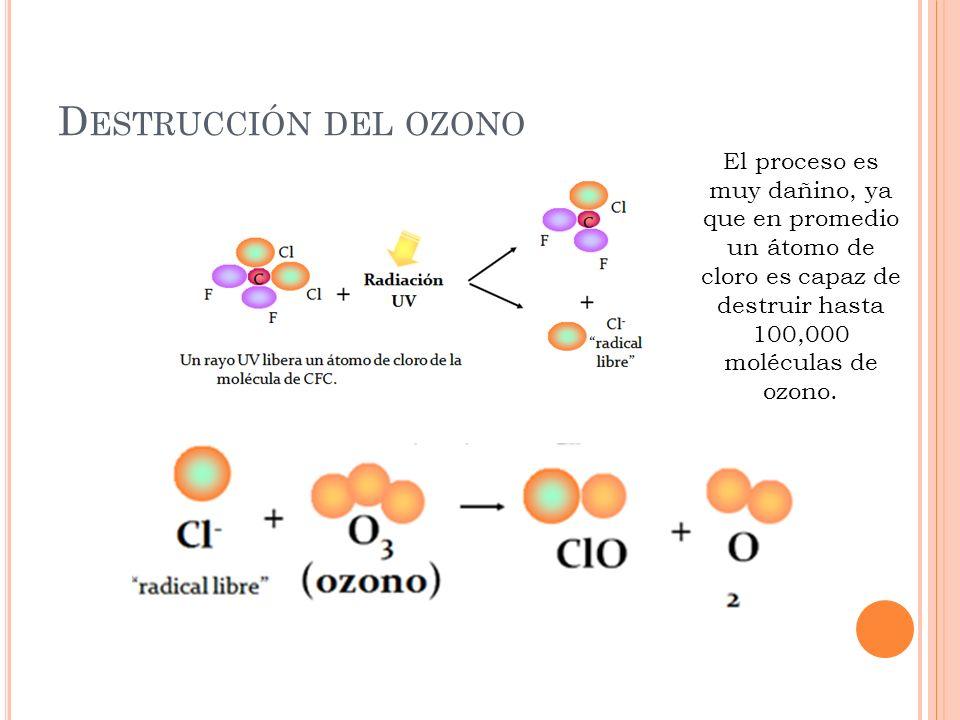 Destrucción del ozono El proceso es muy dañino, ya que en promedio un átomo de cloro es capaz de destruir hasta 100,000 moléculas de ozono.