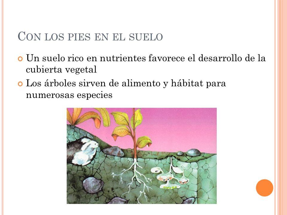 Con los pies en el suelo Un suelo rico en nutrientes favorece el desarrollo de la cubierta vegetal.