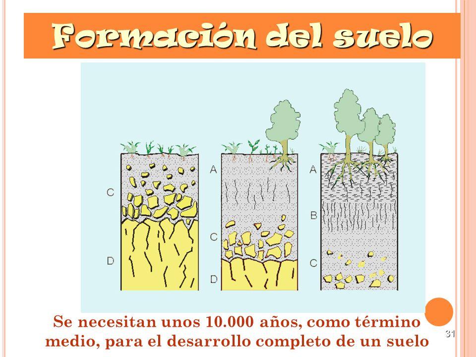 Formación del suelo Se necesitan unos 10.000 años, como término medio, para el desarrollo completo de un suelo.