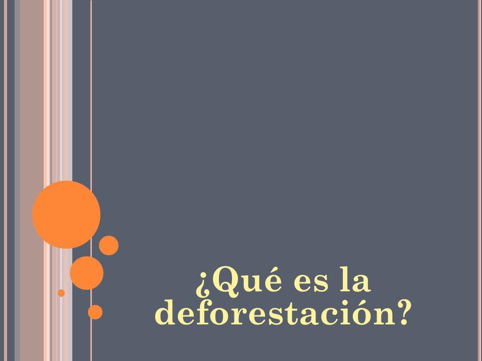 ¿Qué es la deforestación
