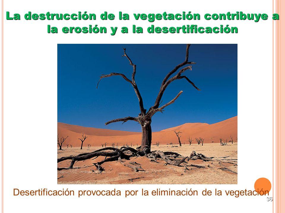La destrucción de la vegetación contribuye a la erosión y a la desertificación