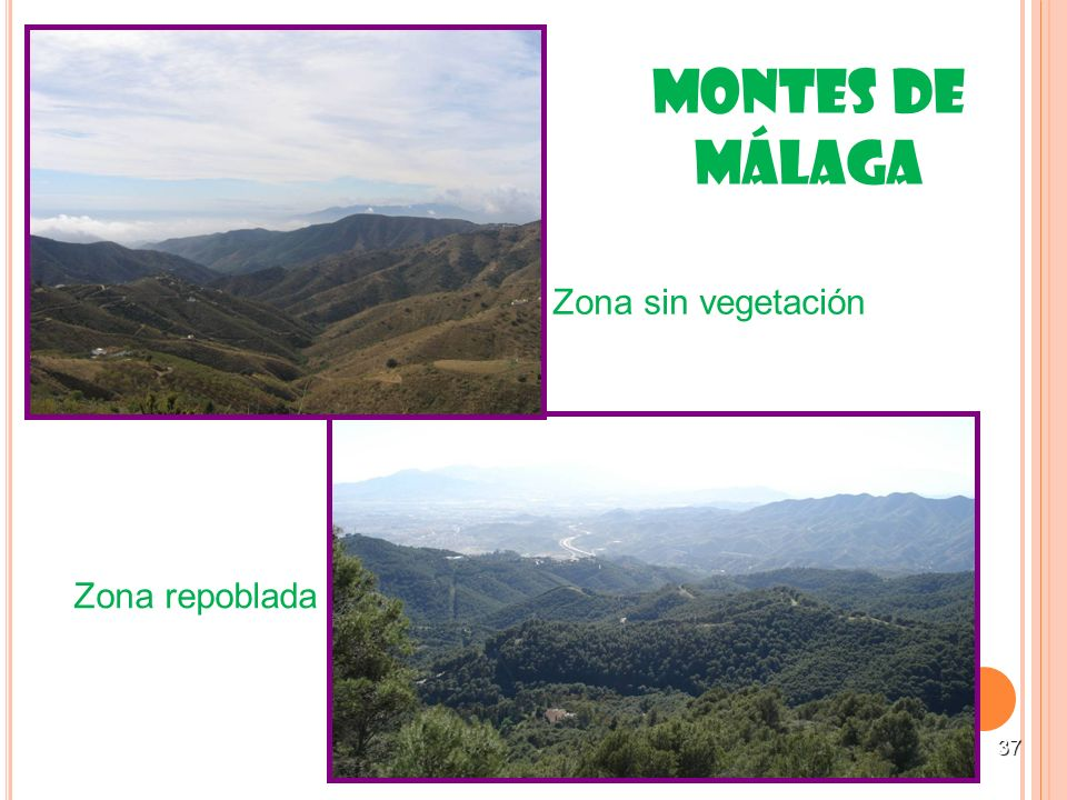 Montes de Málaga Zona sin vegetación Zona repoblada 37