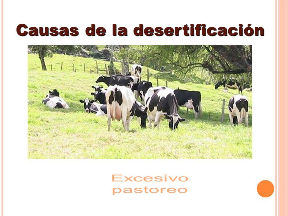 Causas de la desertificación