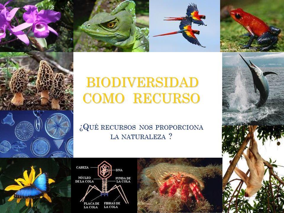 BIODIVERSIDAD COMO RECURSO ¿Qué recursos nos proporciona la naturaleza