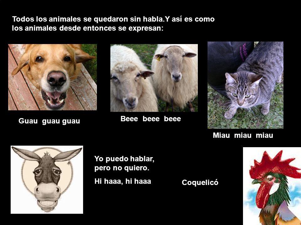 Todos los animales se quedaron sin habla
