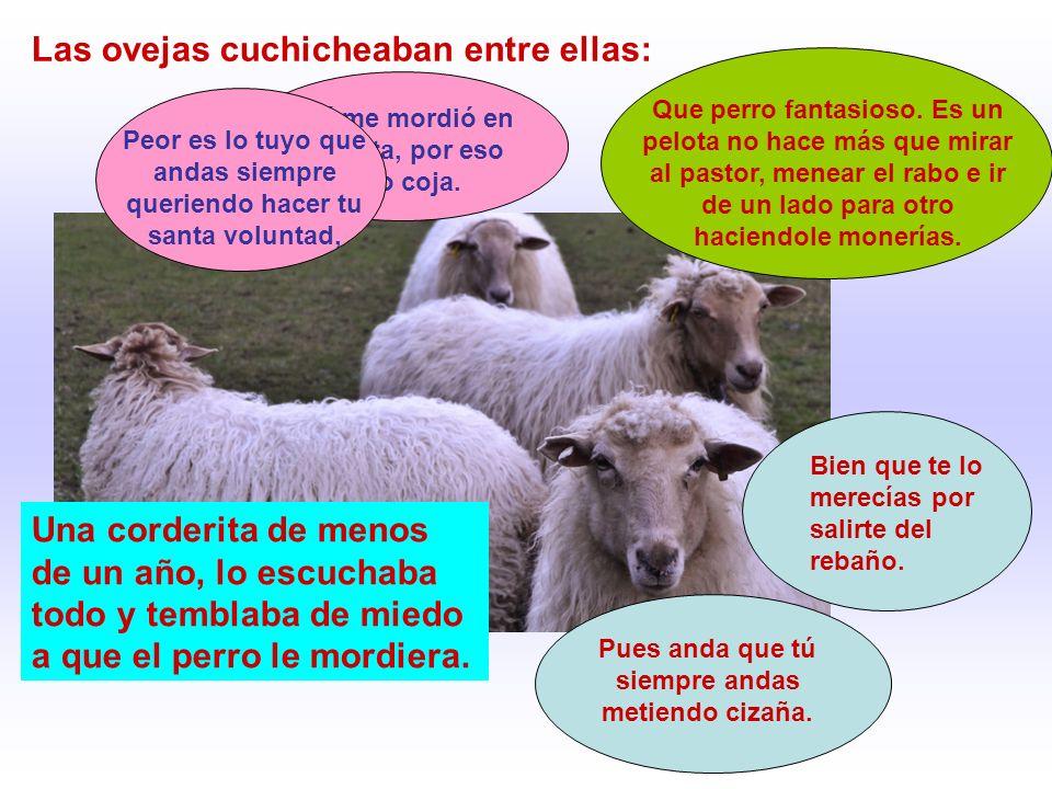 Las ovejas cuchicheaban entre ellas: