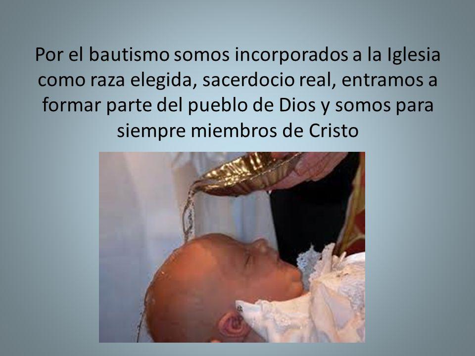 Por el bautismo somos incorporados a la Iglesia como raza elegida, sacerdocio real, entramos a formar parte del pueblo de Dios y somos para siempre miembros de Cristo