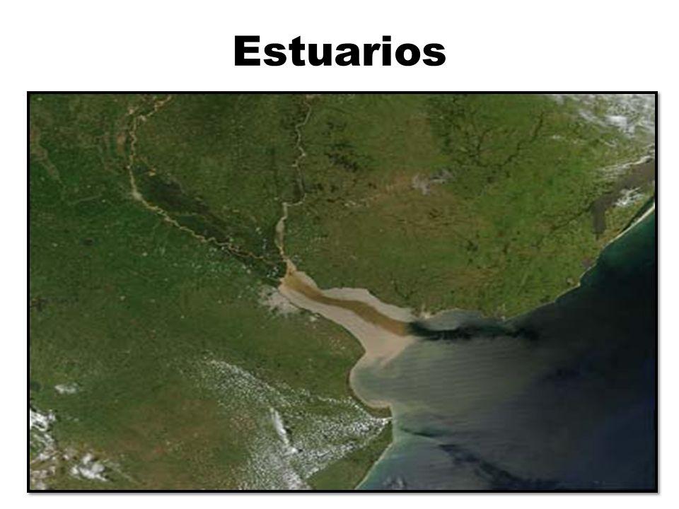Estuarios