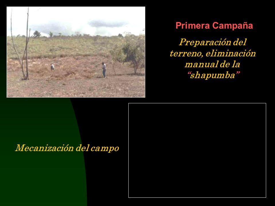 Preparación del terreno, eliminación manual de la shapumba