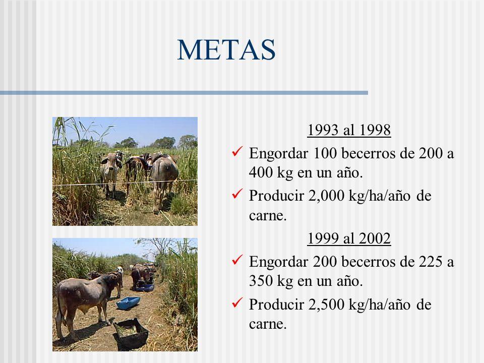 METAS 1993 al 1998 Engordar 100 becerros de 200 a 400 kg en un año.