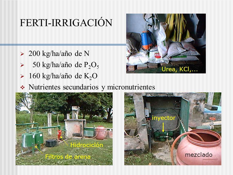 FERTI-IRRIGACIÓN 200 kg/ha/año de N 50 kg/ha/año de P2O5