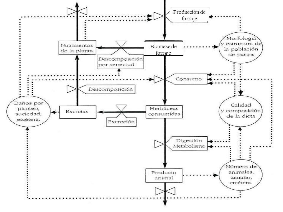 Biomasa de forraje Producción de forraje