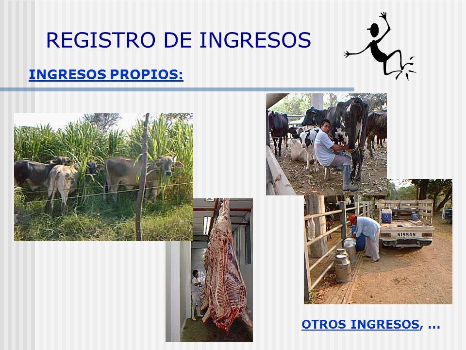 REGISTRO DE INGRESOS INGRESOS PROPIOS: OTROS INGRESOS, ...