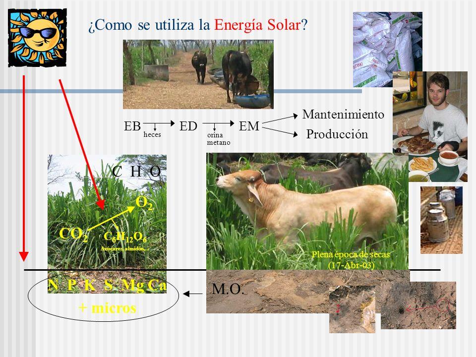 ¿Como se utiliza la Energía Solar