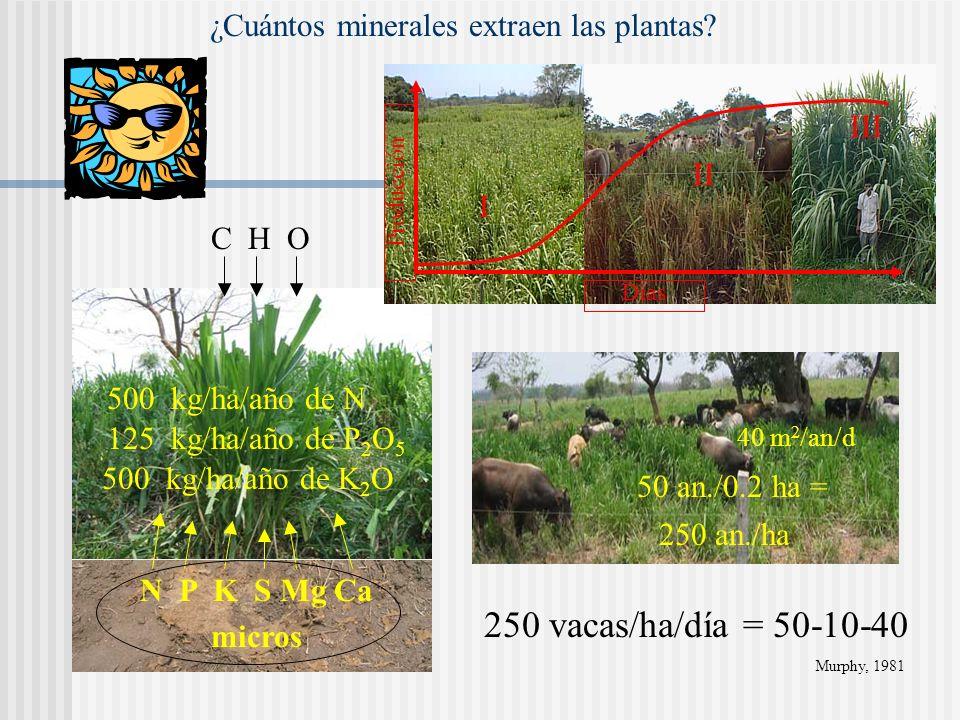 ¿Cuántos minerales extraen las plantas