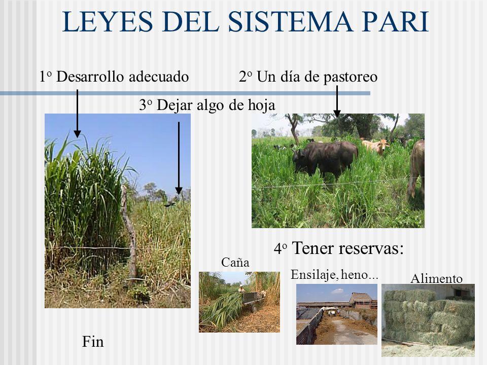 LEYES DEL SISTEMA PARI 1o Desarrollo adecuado 2o Un día de pastoreo