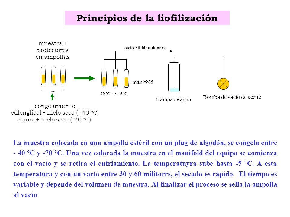 Principios de la liofilización