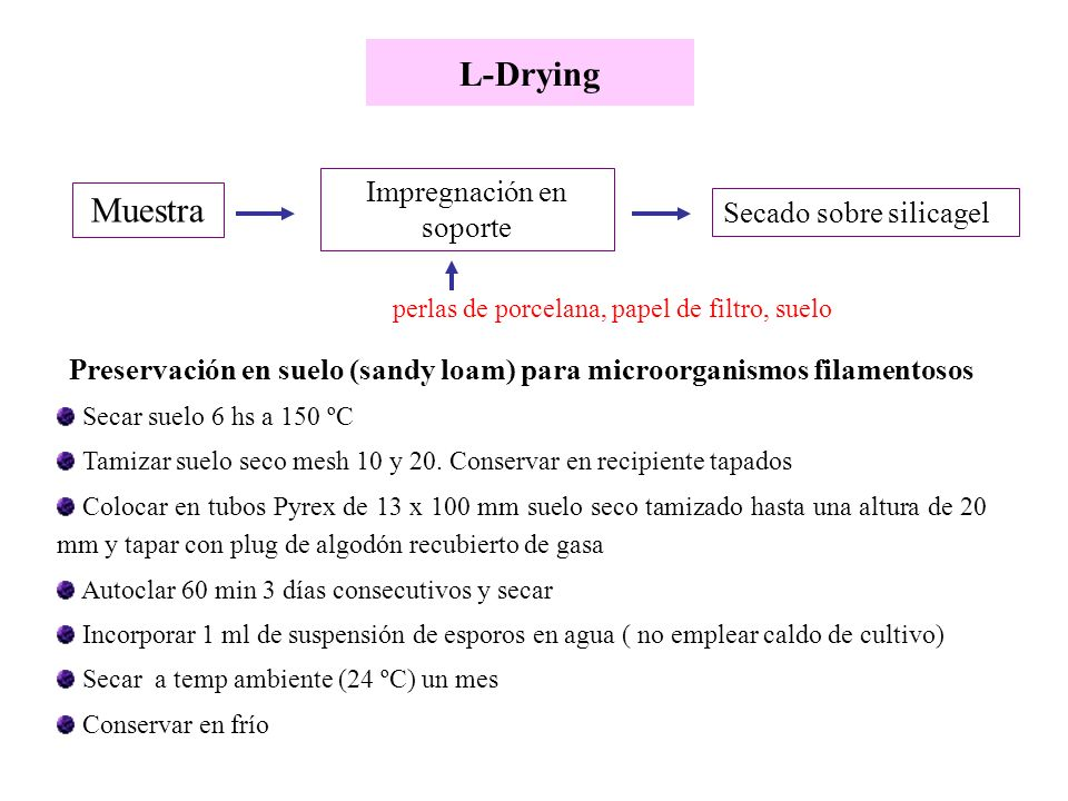 Preservación en suelo (sandy loam) para microorganismos filamentosos