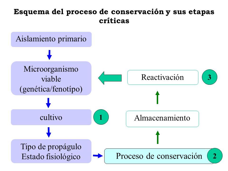 Esquema del proceso de conservación y sus etapas críticas