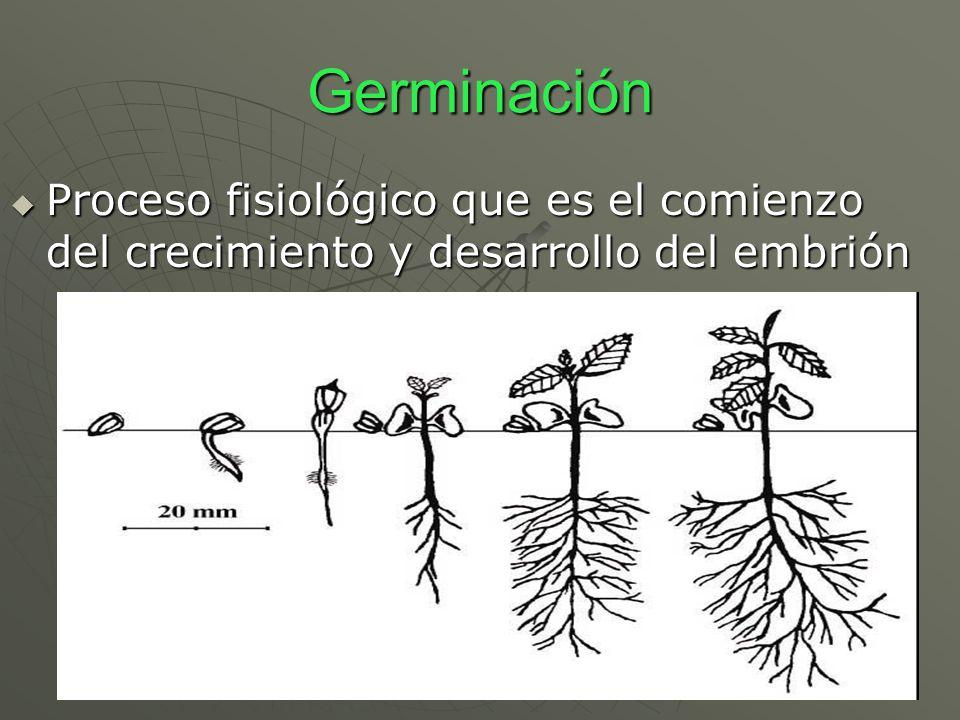 Germinación Proceso fisiológico que es el comienzo del crecimiento y desarrollo del embrión