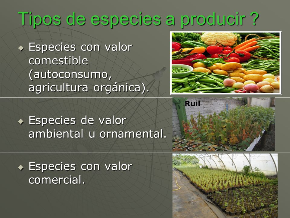 Tipos de especies a producir