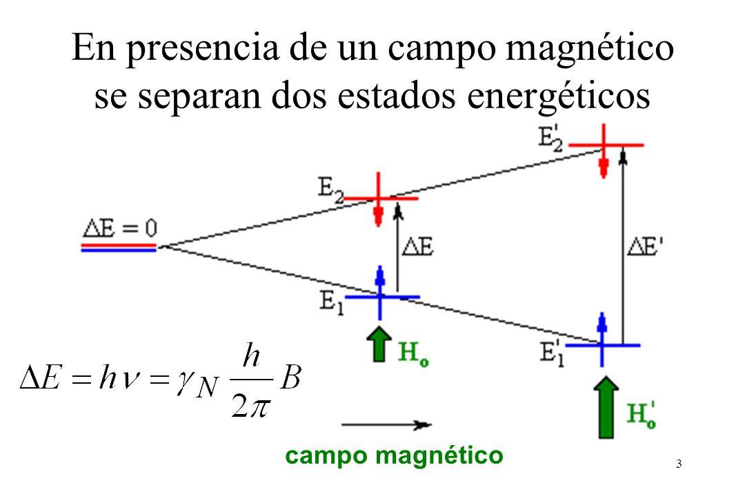 En presencia de un campo magnético se separan dos estados energéticos