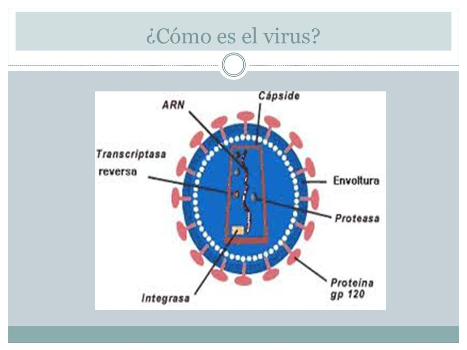 ¿Cómo es el virus