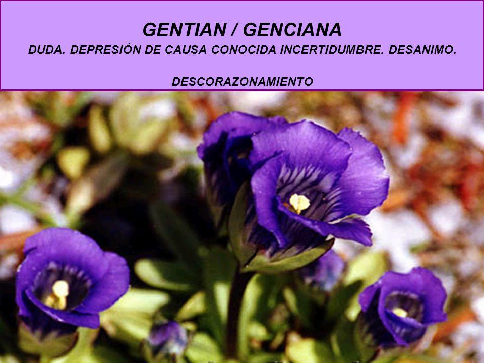 GENTIAN / GENCIANA DUDA. DEPRESIÓN DE CAUSA CONOCIDA INCERTIDUMBRE