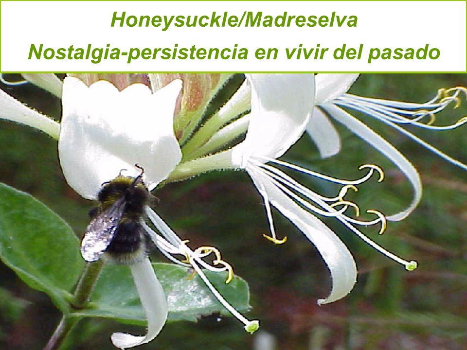 Honeysuckle/Madreselva Nostalgia-persistencia en vivir del pasado