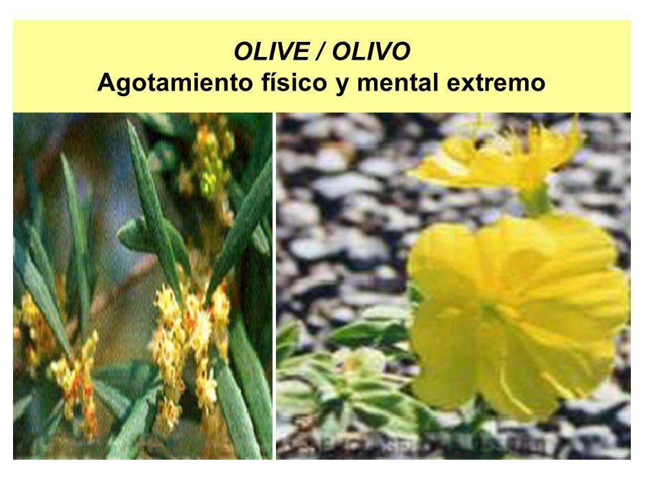 OLIVE / OLIVO Agotamiento físico y mental extremo