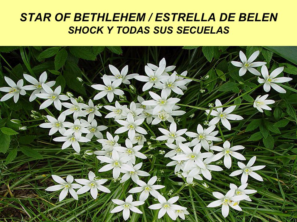STAR OF BETHLEHEM / ESTRELLA DE BELEN SHOCK Y TODAS SUS SECUELAS