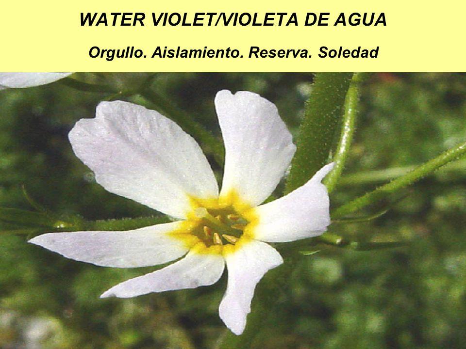 WATER VIOLET/VIOLETA DE AGUA Orgullo. Aislamiento. Reserva. Soledad
