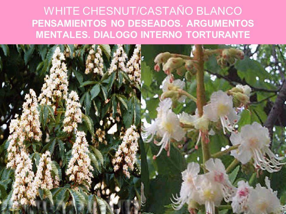 WHITE CHESNUT/CASTAÑO BLANCO PENSAMIENTOS NO DESEADOS